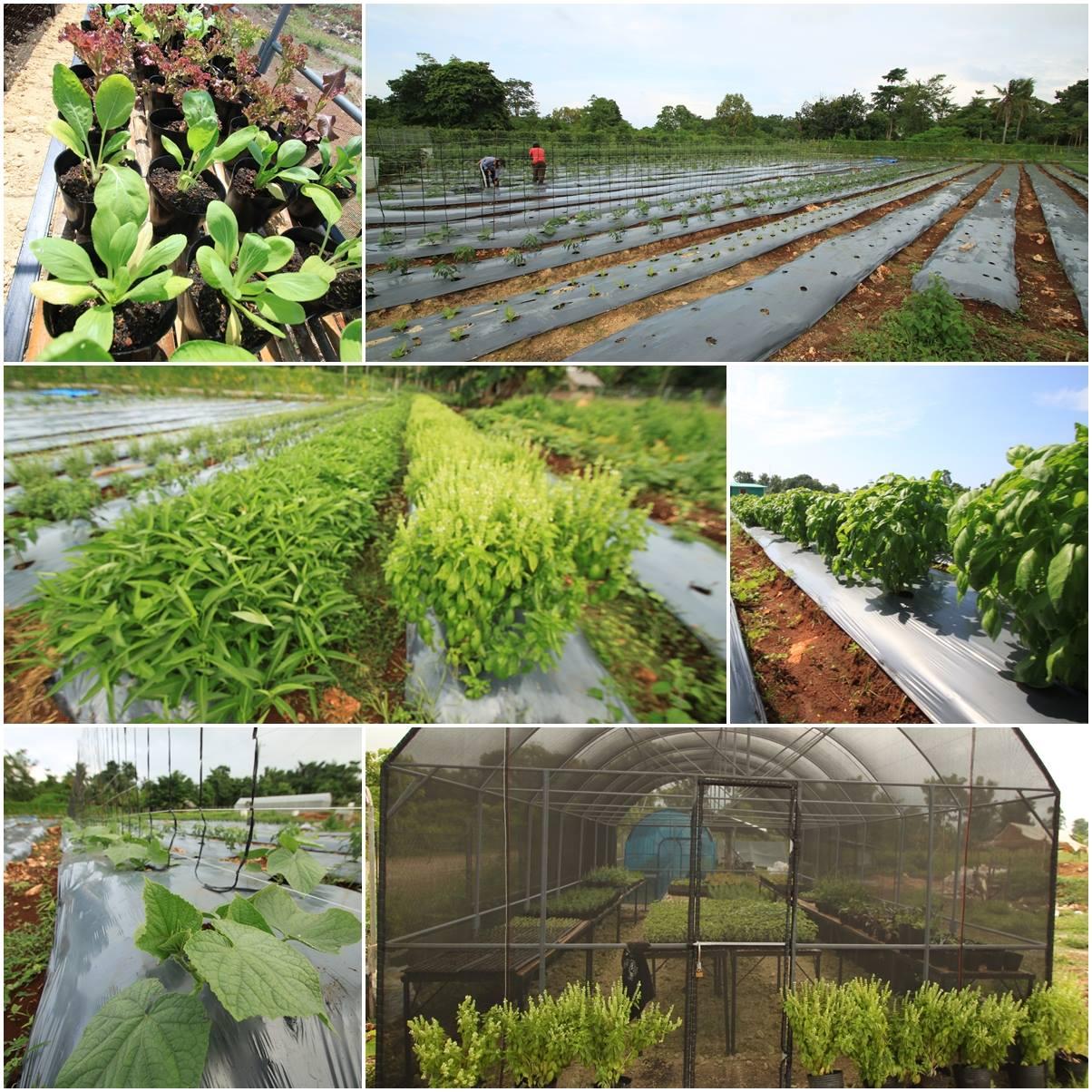 Coco Grove Goes Organic! Image