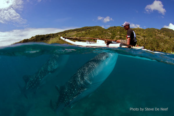 Our experience on the Oslob Whale Sharks Tour Image